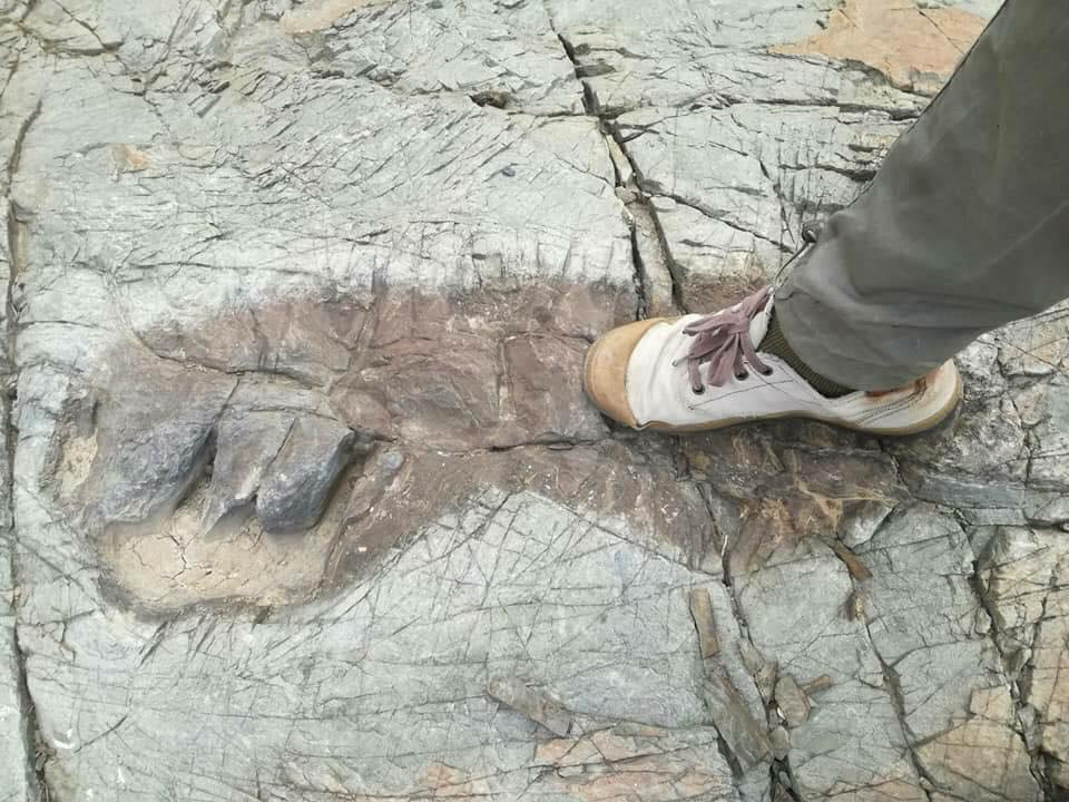 Ancient Giants? Enormous Footprints Discovered Near Tarija, Bolivia Giant-tarija-bolivia-4_orig